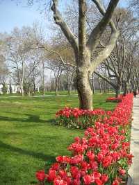 Rote blühende Tulpen säumen den Weg