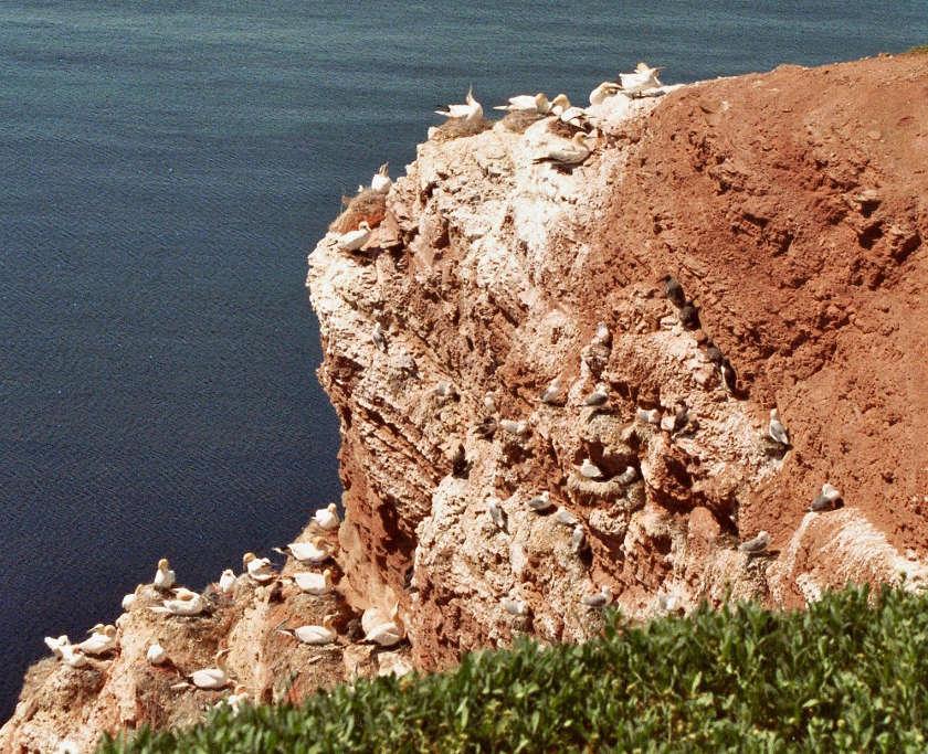 Der Vogelfelsen auf Helgoland