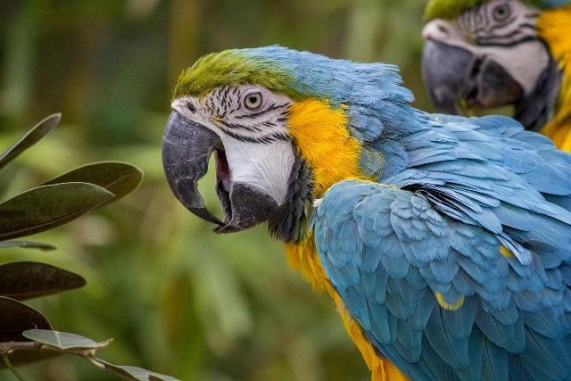Papageien am Amazonas