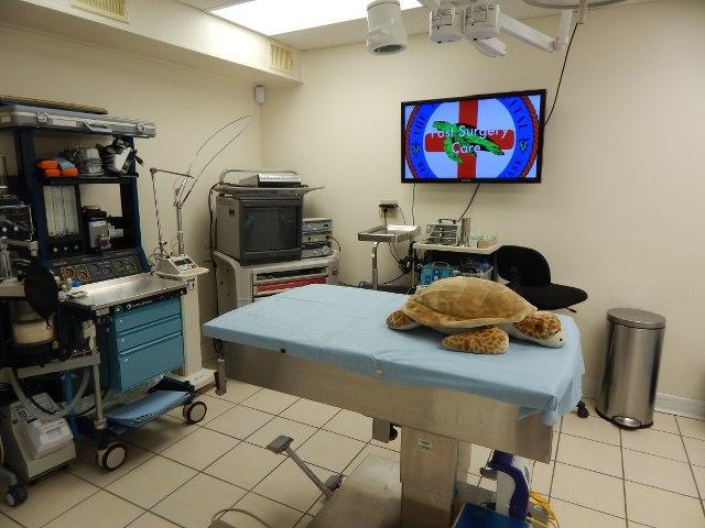 Operationssaal des Schildkrötenkrankenhauses Florida
