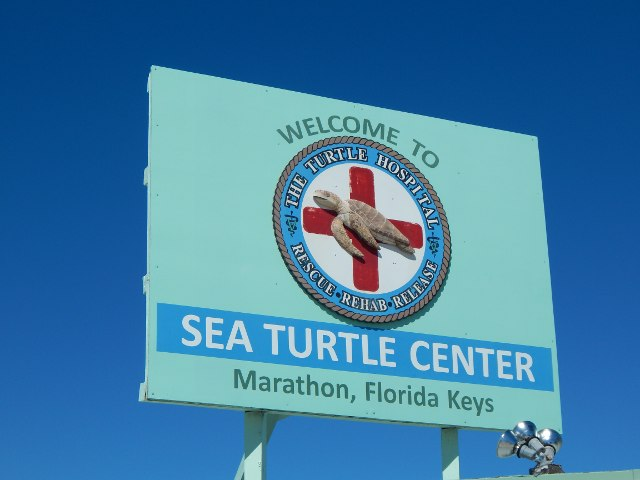 Sea Turtle Center Marathon Florida Keys