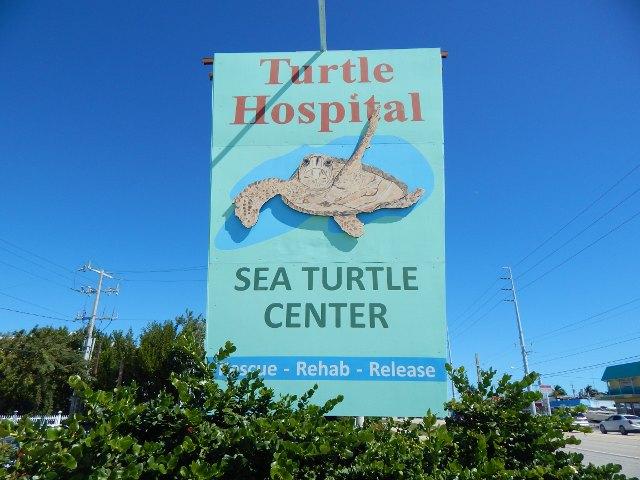 Turtle Hospital Florida