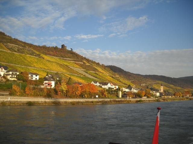 Weinberge am Rhein im Herbst