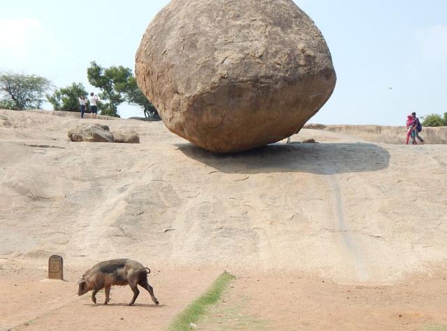 Schwein vor dem Butter Ball Mahabalipuram