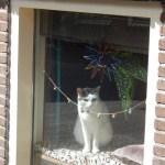 Die Katze im Fenster schaut über die Straße.