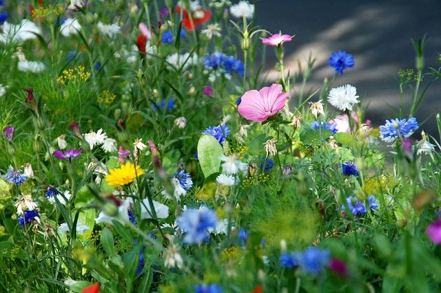 Bunte Blumen im Feld