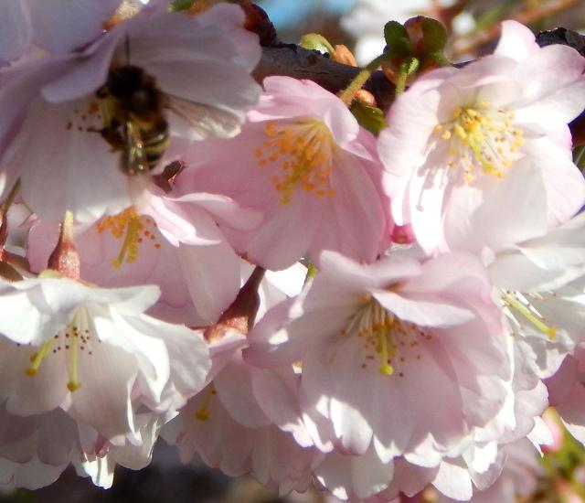 Schützt die Bienen