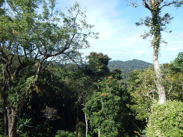 Penang Hill Natur Malaysia Aussichtspunkte