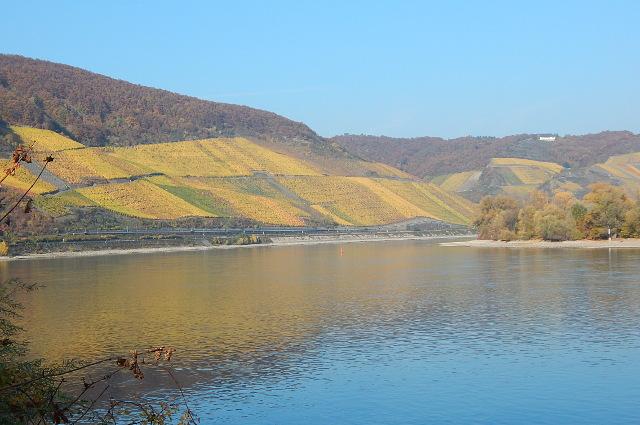Der Bopparder Hamm im Herbst