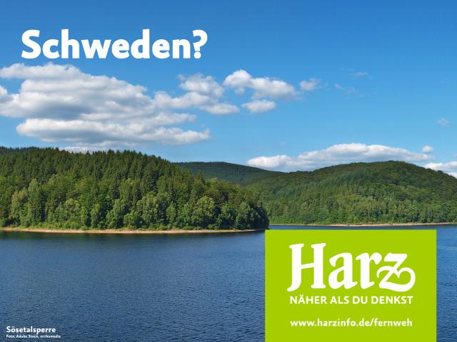 Wald an der Sösetalsperre im Harz