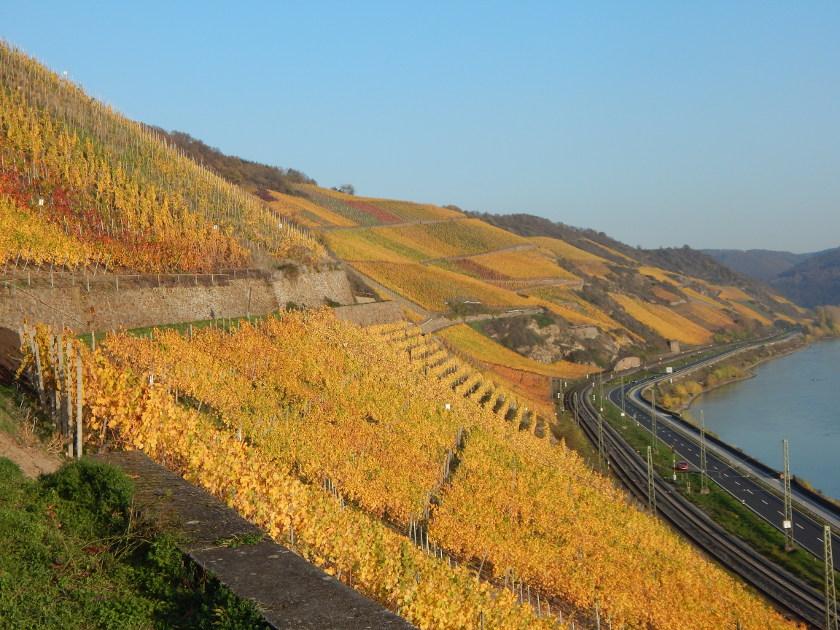 Weinwandern in Boppard, der Weinlehrpfad im Bopparder Hamm -