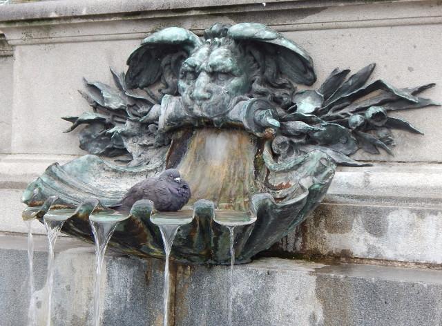 Erholsames Bad einer Taube im Wasserbecken