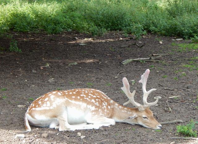 Das Wildgehege beim Jagdschloss Niederwald