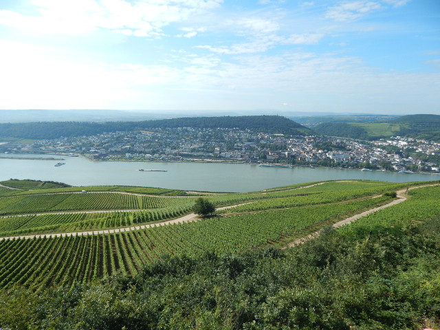 Blick vom Niederwalddenkmal auf Bingen am Rhein