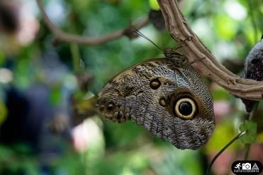 In der Heimat: Schmetterlinge in Wuppertal 3