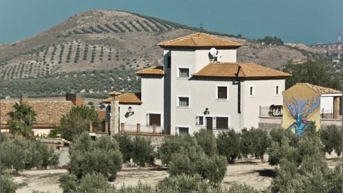 elcarito-olivos-panoramica