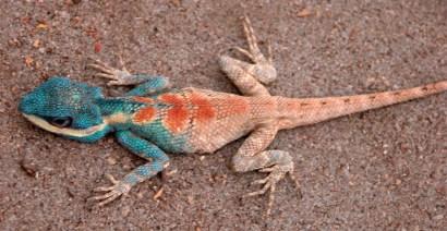 Cool little lizard at Wat Umong, Chiang Mai