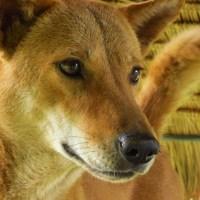 Camera Rambles: Elephant Nature Park - Dog Portraits