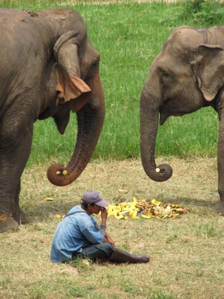 Elephants gossiping. Typical!