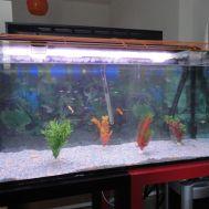 Nuevo acuario - 2