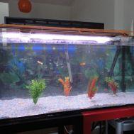 Nuevo acuario - 5