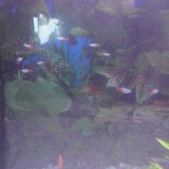 Nuevo acuario - 6