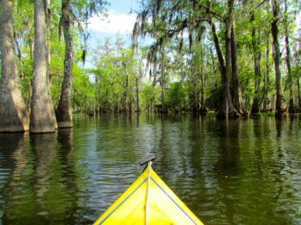 Kayaking the bayou