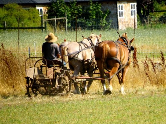 Horse Drawn Farm