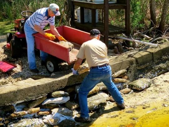 Dad And Eric Repairing The Seawall