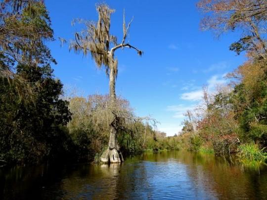 On The Wild Wacissa River