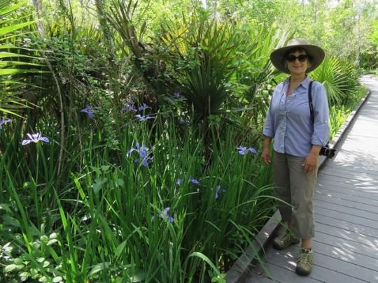 Wild Iris Blooming In The Preserve