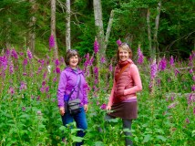 Hiking in a forest of foxglove with Amanda