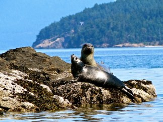Mama and young seal