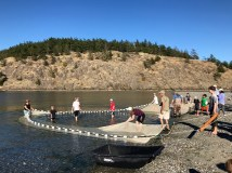 Seining event at Spencer Spit