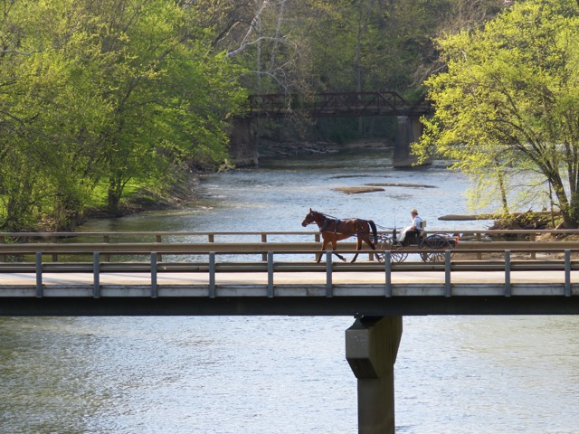 An Amish horse and buggy