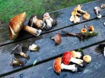 Colorful fall mushrooms