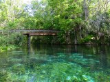 Gorgeous turquoise waters of Silver Springs