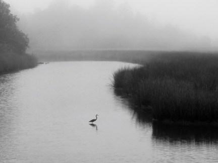 Davis Bayou on a foggy morning