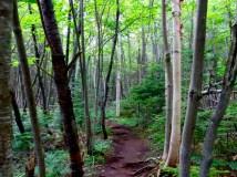 Cobble Hill Trail