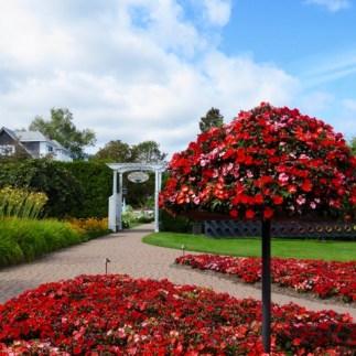 Vibrant floral displays