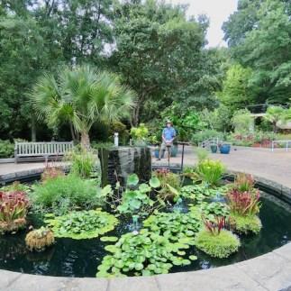 Gorgeous water garden