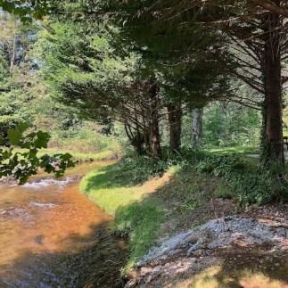 Creekside campsite