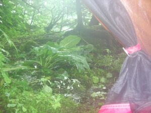 Our worst campsite yet: we woke up to a small creek flowing through our tent, after having our fire doused by the wake of a cruise ship the night before.