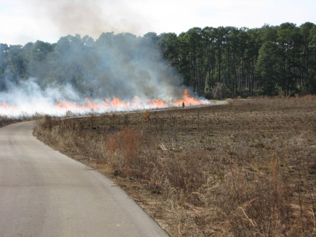 a control fire burns in the distance in a pasture