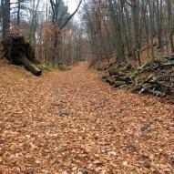 Yellow trail near Michigan Road
