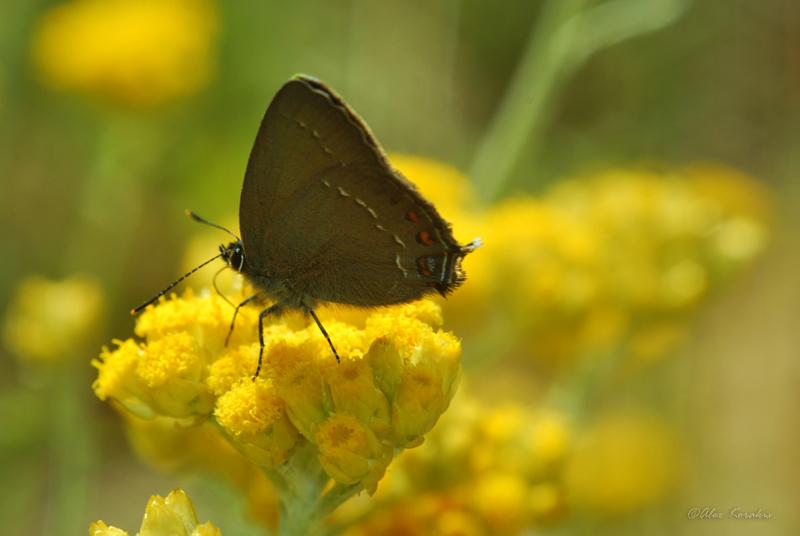Butterflies and moths (5/6)