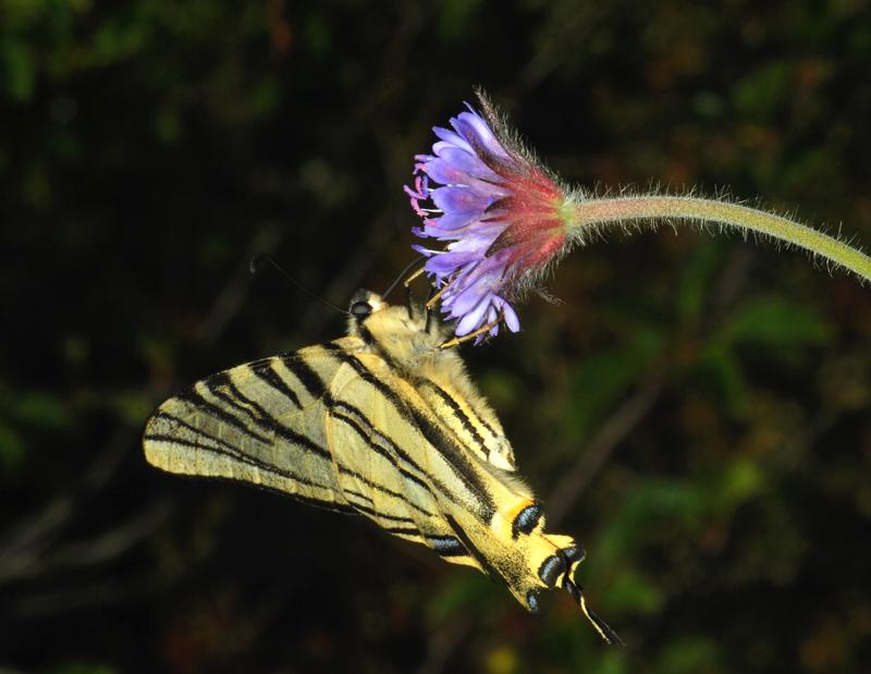 Butterflies and moths (2/6)
