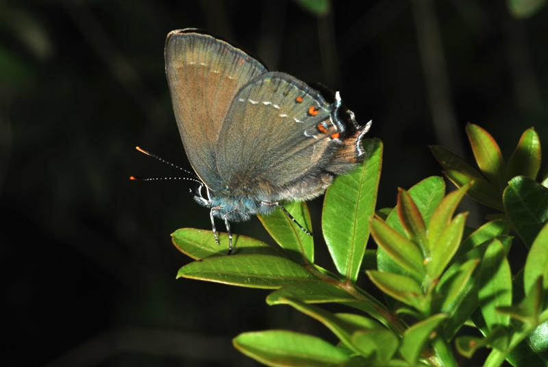 Butterflies and moths (3/6)