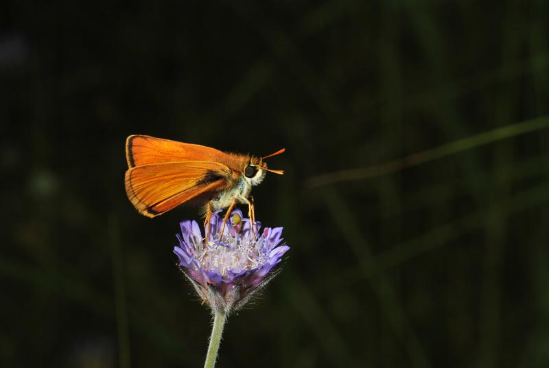 Butterflies and moths (4/6)