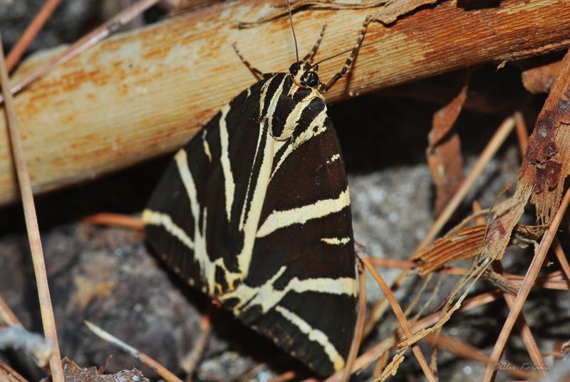 Butterflies and moths (6/6)